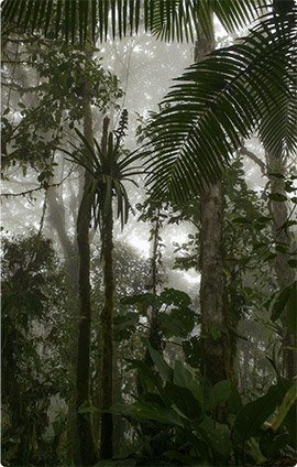 Cloudforest trips and lodges