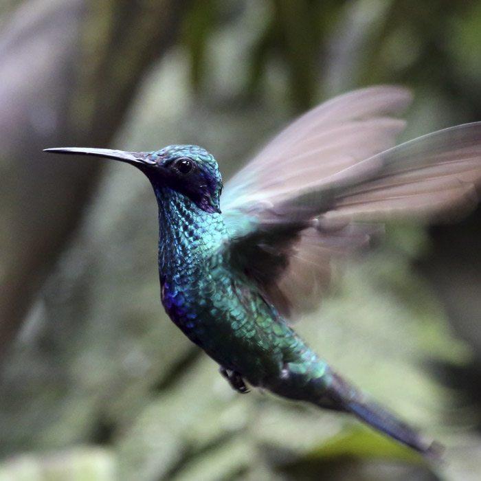 Mindo Cloudforest Ecuador