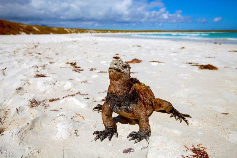 Galapagos National Park Rules