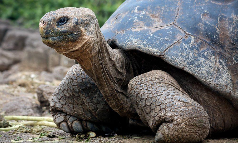 Galapagos best wildlife