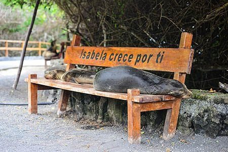 Galapagos Cruise Tours and hotel Packages