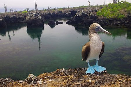 When to visit the Galapagos islands