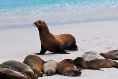 Isabela Galapagos travel guide and tips