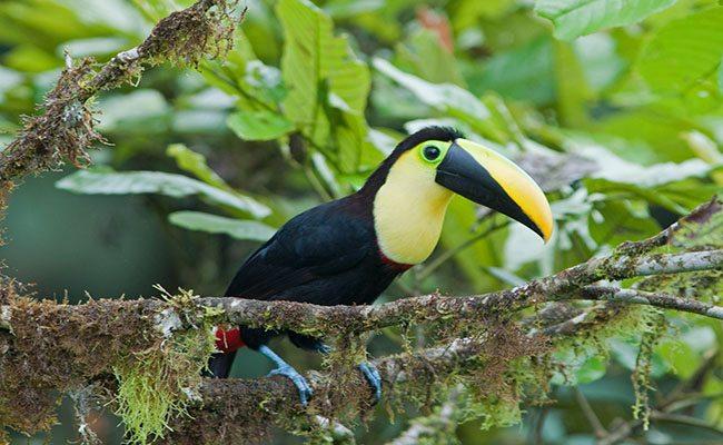 Ecuador birding options