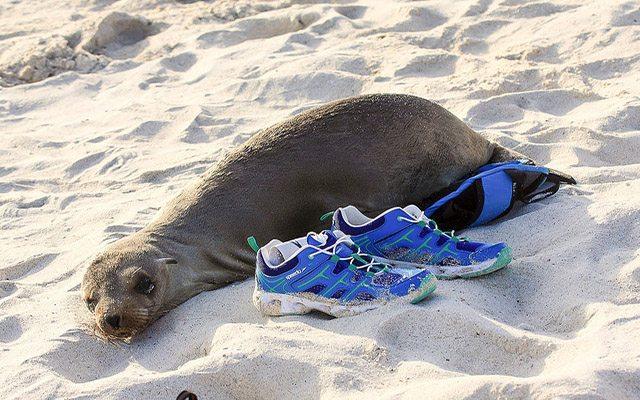 Galapagos beaches to visit