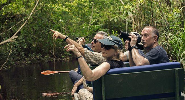 Birdwatching Amazon Rainforest