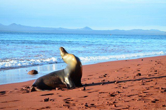 Galapagos Santa Fe island