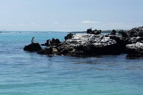 January tours in Galapagos