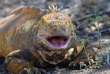 Traveling to Galapagos in March
