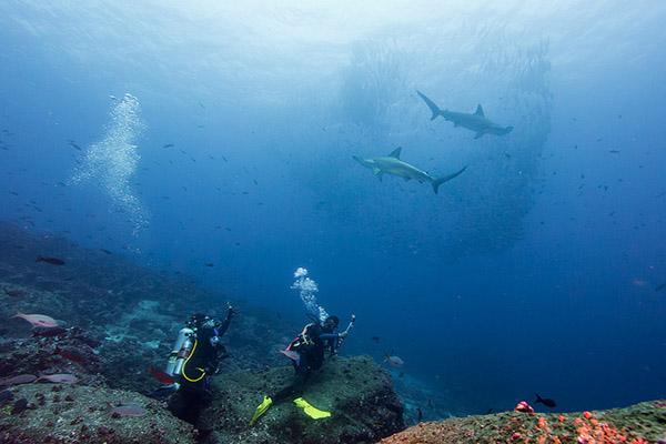 Galapagos Sharks Diving Tours