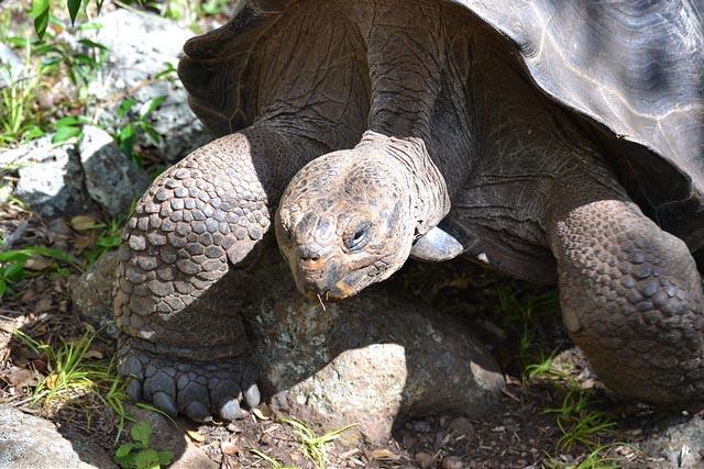Galapagos Wildlife during May