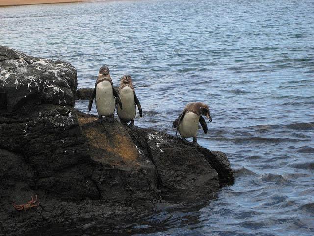 September Galapagos Travel