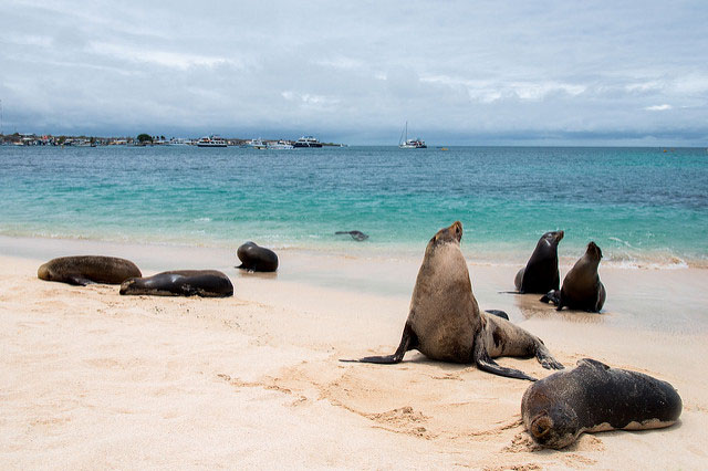 Travel to the Galapagos after covid