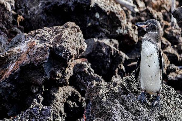 Galapagos Islands in October