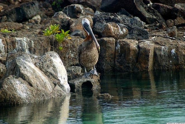 Galapagos Islands Natural History
