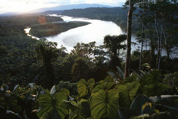 Amazon Rainforest Tour Activities
