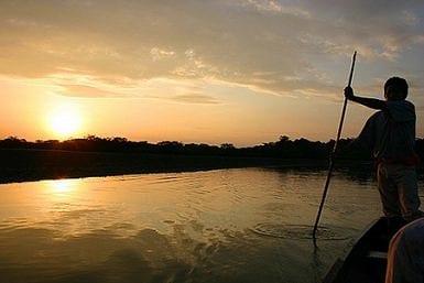 Dry Season Amazon Rainforest