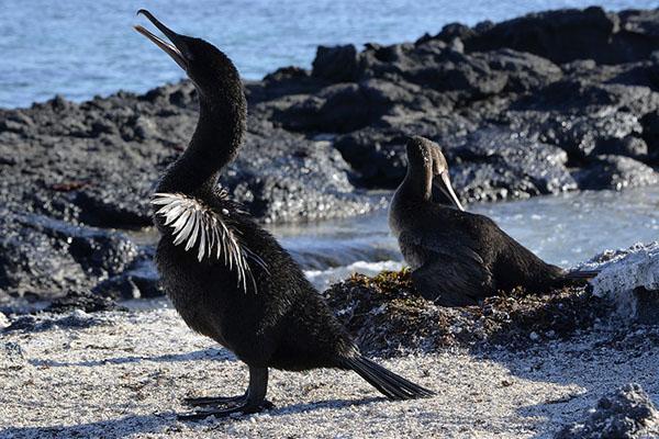 Galapagos Fernandina Island