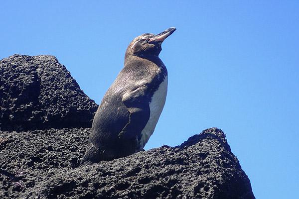Galapagos Cruises - Fernandina Island