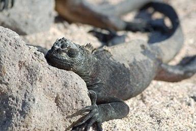 Galapagos North Seymour wildlife