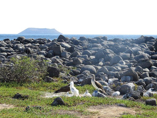 North Seymour Galapagos Tours