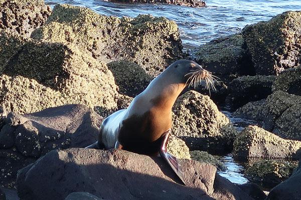 Galapagos Islands North Seymour Highlights