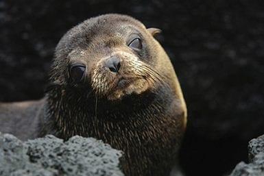 November in the Galapagos Islands
