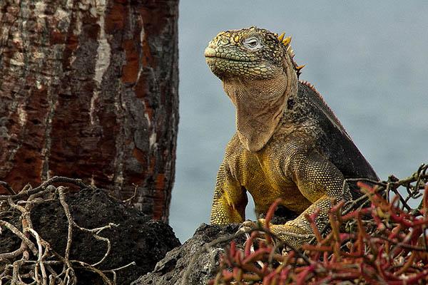 Galapagos Islands in November