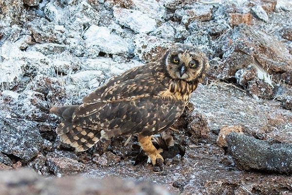 Genovesa Island Wildlife