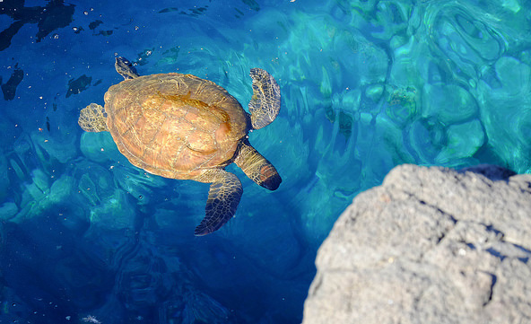 Santiago Island Wildlife