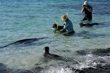 Snorkeling guide for Galapagos