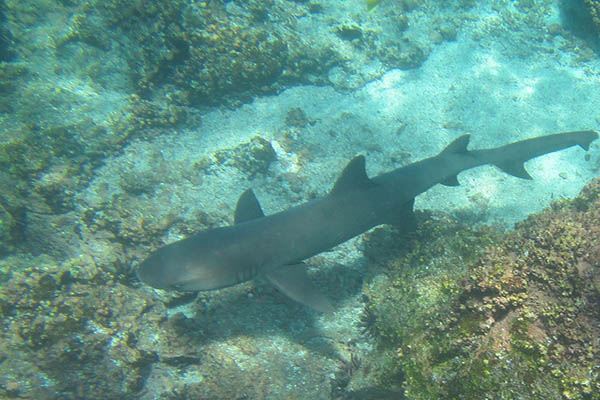 Sites for snorkeling in Galapagos Islands