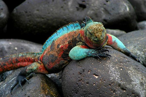 Wildlife in Punta Suarez Galapagos