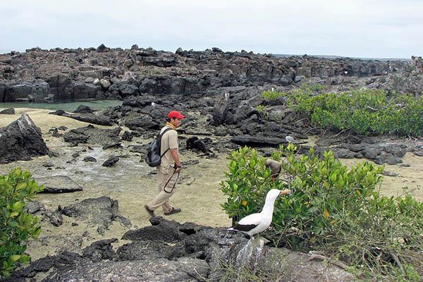 Wildlife at Darwin Bay Galapagos islands