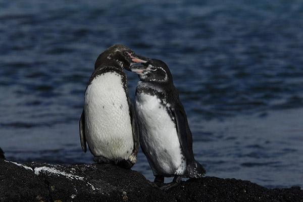 Main species of Galapagos Wildlife