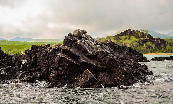 Things to do in Devils Crown Galapagos