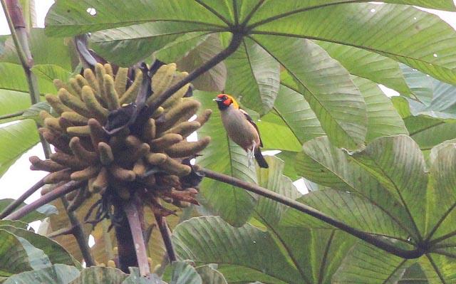 Getting to Tena Rainforest Ecuador