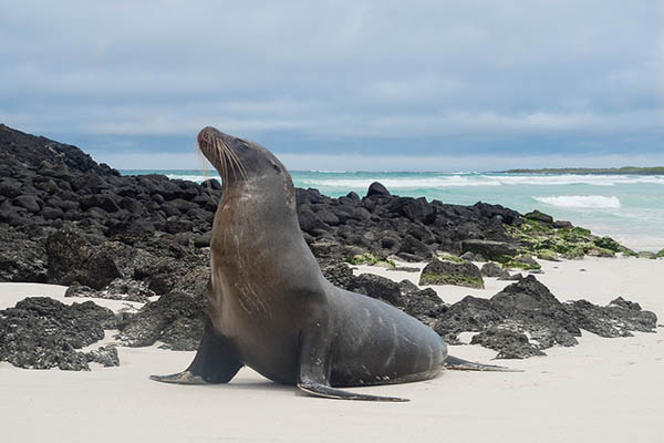 Wildlife to see in Tortuga Bay