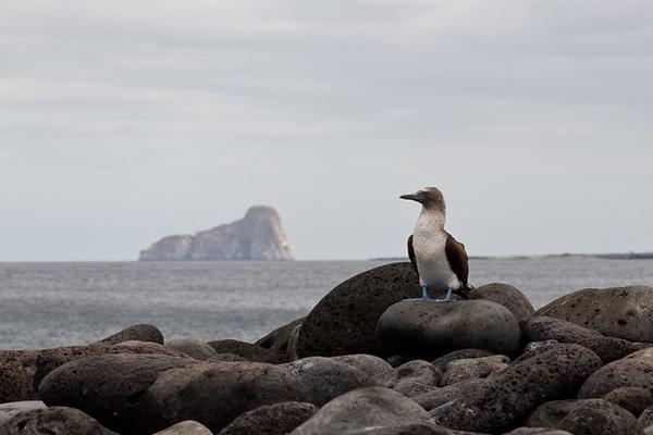Wildlife at kicker Rock Galapagos islands