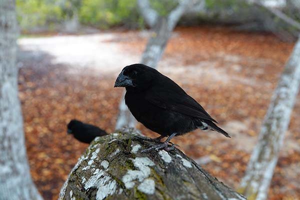 Where to see the Darwin Finches