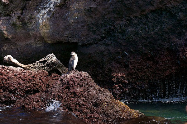 Wildlife at Elizabeth Bay Galapagos islands