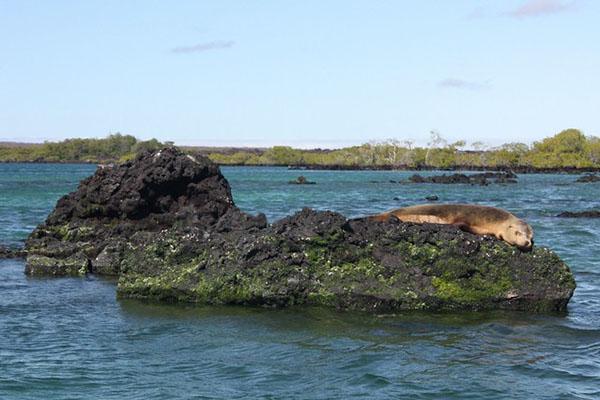 Highlights of Elizabeth bay Galapagos