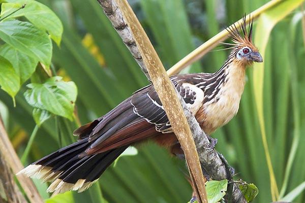Amazon Wildlife Ecuador