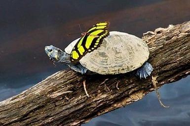 Amazon wildlife species