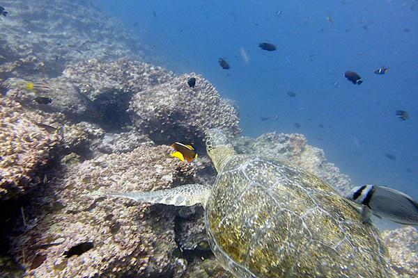 Sea currents Galapagos Islands