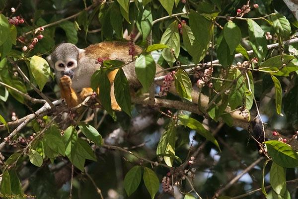 Where to see wildlife amazon rainforest