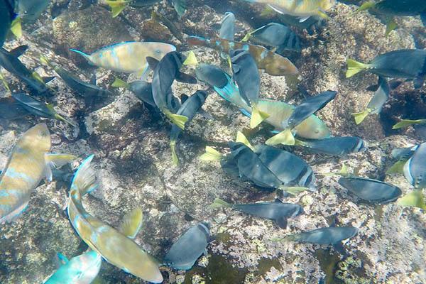 Galapagos Cruises - Pinzon Island