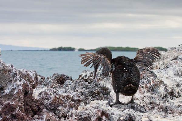 Western itineraries Galapagos cruises
