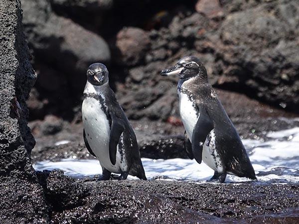 Galapagos wildlife during pandemic