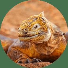 Galapagos per Month